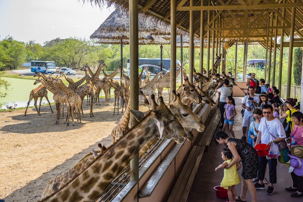 สวนสัตว์เปิดซาฟารีเวิลด์