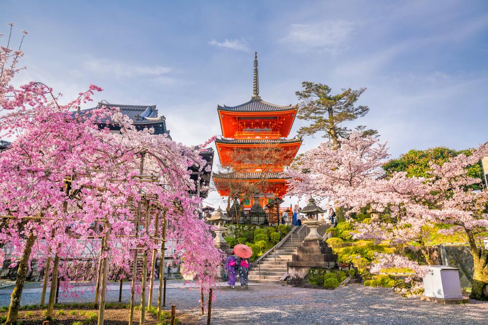 ซากุระบานที่ประเทศญี่ปุ่น