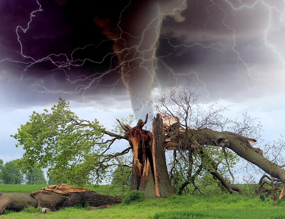 ต้นไม้หลีกให้ห่างห้ามจอดใกล้เสี่ยงต้นไม้โค่น