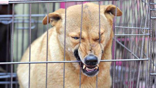 ถูกสุนัขกัดค่าวัคซีนพิษสุนัขบ้า เบิกได้ไหม