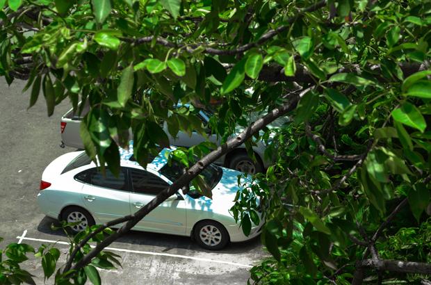 10 ต้นไม้หลีกให้ห่าง ห้ามจอดใกล้