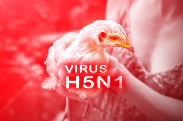รู้เท่าทัน ไข้หวัดนก H5N1 ระบาดในจีน