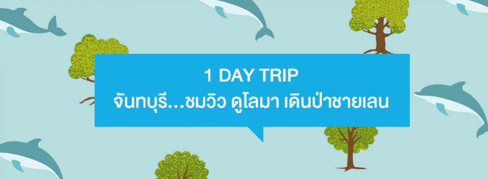 จันทบุรี ชมวิว ดูโลมา เดินป่าชายเลน