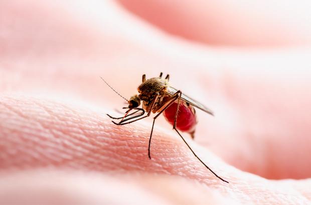 โรคชิคุนกุนยากับไข้เลือดออก ต่างกันยังไง